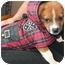 Photo 3 - Boxer Mix Puppy for adoption in Hainesville, Illinois - Baby Boy