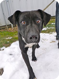 Terrier (Unknown Type, Small) Mix Dog for adoption in Metamora, Indiana - Felix