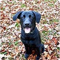 Adopt A Pet :: Demi - Jacksonville, FL