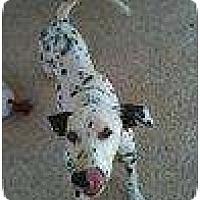 Adopt A Pet :: Squirt - League City, TX