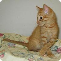 Adopt A Pet :: Bobo - Norwich, NY