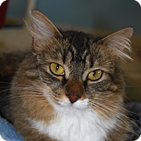 Adopt A Pet :: Tiger Lily - North Branford, CT