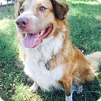 Adopt A Pet :: Windy Gale - Austin, TX