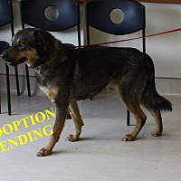 Adopt A Pet :: KOOPER - Winnipeg, MB