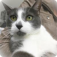 Adopt A Pet :: Mister - Webster, MA