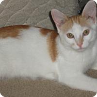 Adopt A Pet :: Bentley - Adoption Pending! - Colmar, PA
