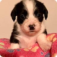 Adopt A Pet :: Sonny - North Brunswick, NJ