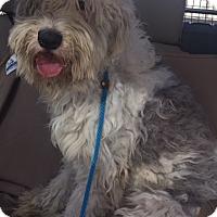 Adopt A Pet :: Geneva - Woonsocket, RI