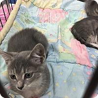 Adopt A Pet :: Georgia - Simpsonville, SC