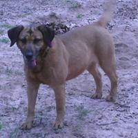 Adopt A Pet :: Wee One - hopkins, SC