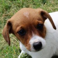 Adopt A Pet :: Peanut - Von Ormy, TX