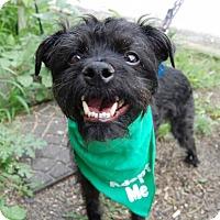 Adopt A Pet :: Max - Wilmington, DE