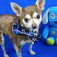 Adopt A Pet :: Kermie - Benton, LA