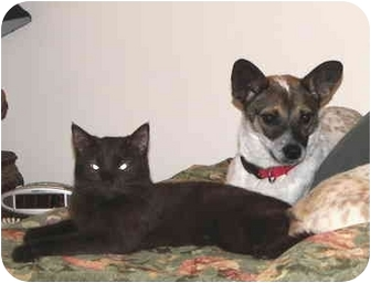 Jack Russell Terrier/Rat Terrier Mix Dog for adoption in North Wilkesboro, North Carolina - Lela