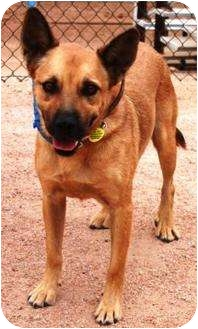 German Shepherd Dog/Australian Cattle Dog Mix Dog for adoption in Gilbert, Arizona - Lucky