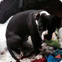 Adopt A Pet :: bullet - Wanaque, NJ