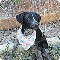 Adopt A Pet :: Blu - Fort Worth, TX