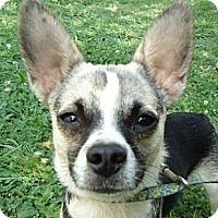 Adopt A Pet :: Cammy - P, ME