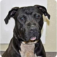 Adopt A Pet :: Astro - Port Washington, NY