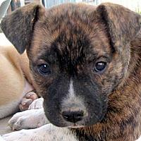 Adopt A Pet :: Baby Flossie - Oakley, CA