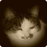 Adopt A Pet :: Narla - Riverside, RI