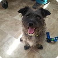 Adopt A Pet :: Toto - Chico, CA