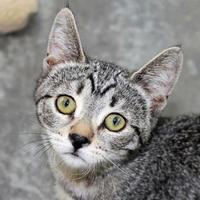 Adopt A Pet :: Bonita - Mountain Center, CA