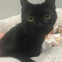 Adopt A Pet :: Thelma - Twinsburg, OH