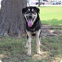 Adopt A Pet :: Matt - Middlebury, CT