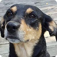 Adopt A Pet :: Primrose - Overland Park, KS