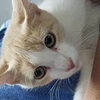 Adopt A Pet :: Fifi - Troy, IL