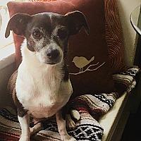 Adopt A Pet :: Hermes - Rancho Santa Fe, CA