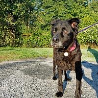 Adopt A Pet :: Darla - Greer, SC