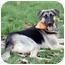 Photo 3 - German Shepherd Dog/Anatolian Shepherd Mix Dog for adoption in Sacramento, California - Bella superrrr