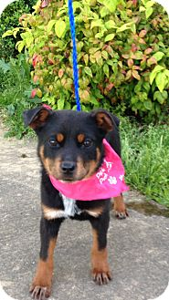 Terrier (Unknown Type, Small) Mix Dog for adoption in Hatifeld, Pennsylvania - Juliet