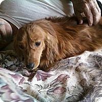 Adopt A Pet :: Copper - Vale, OR