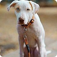 Adopt A Pet :: Otis - Franklinton, NC