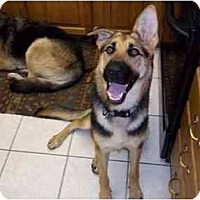 Adopt A Pet :: Shelby - Green Cove Springs, FL