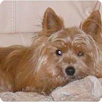 Adopt A Pet :: Dan-O - Tallahassee, FL