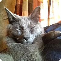 Adopt A Pet :: Sterling - Wenatchee, WA