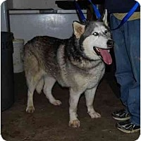 Adopt A Pet :: Dakota - Belleville, MI