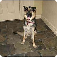 Adopt A Pet :: Lucy - Green Cove Springs, FL