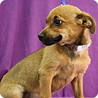 Adopt A Pet :: Suzuki - Broomfield, CO