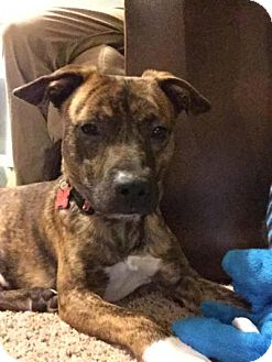 Terrier (Unknown Type, Medium) Mix Dog for adoption in Dublin, Ohio - King
