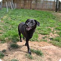 Adopt A Pet :: Iris - Alexandria, VA