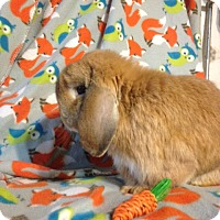 Adopt A Pet :: Dallas - Conshohocken, PA