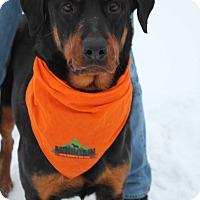 Adopt A Pet :: Heidi - Rexford, NY