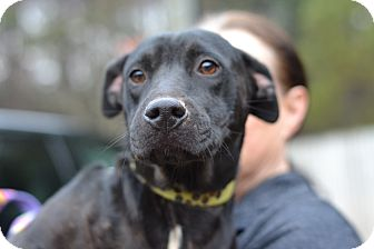 Labrador Retriever Mix Dog for adoption in Acworth, Georgia - LIfe - Board Game Mom