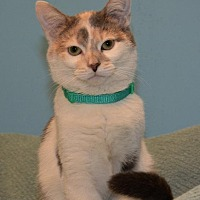 Adopt A Pet :: Carly - Cincinnati, OH