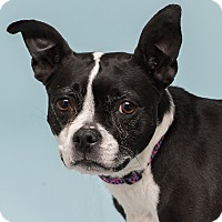 Adopt A Pet :: Ramie - Westfield, NY